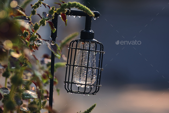 The vintage style lantern in the garden - Stock Photo - Images