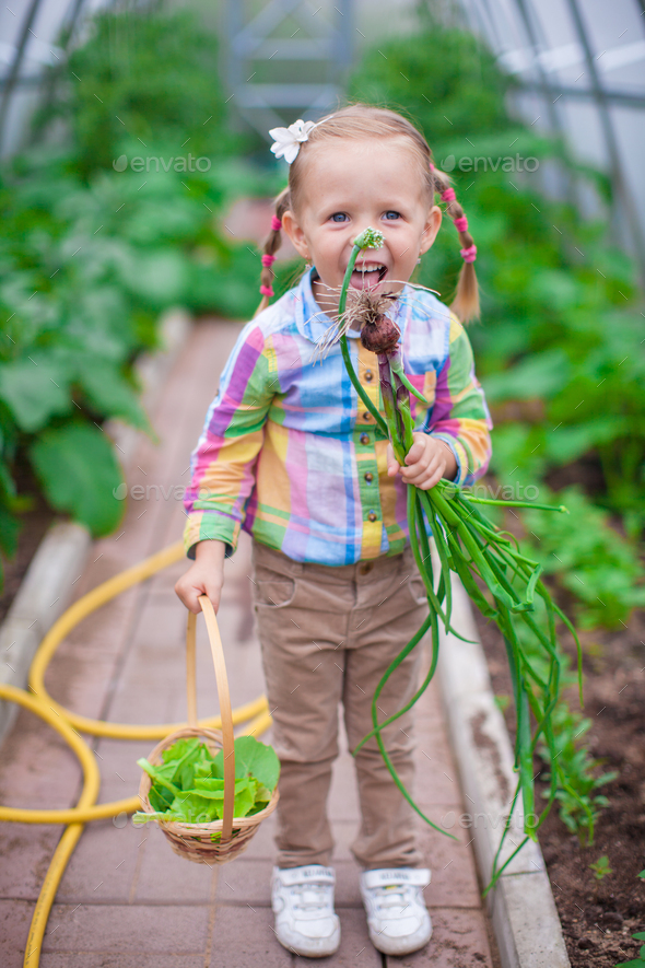 Little cute girl with the harvest in a greenhouse - Stock Photo - Images
