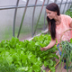 Young woman holding a basket of greenery and onion in the greenhouse - PhotoDune Item for Sale