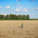 Farm worker in straw hat checks corn field summer day - PhotoDune Item for Sale