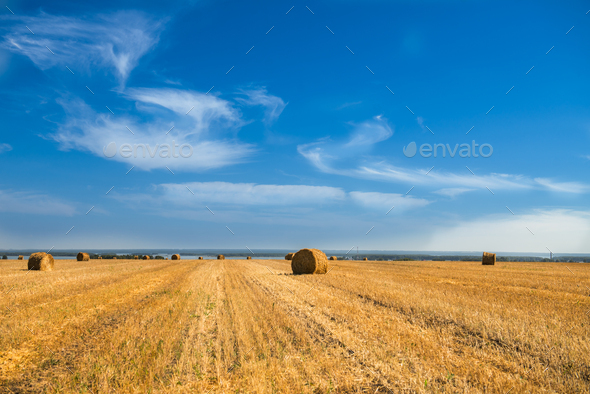 Large Piles of Hay Bales - Stock Photo - Images