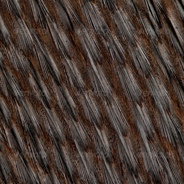 Close-up of Humboldt Penguin feathers, Spheniscus humboldti - Stock Photo - Images