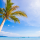 Coconut Palm tree on the sandy beach background blue sky - PhotoDune Item for Sale