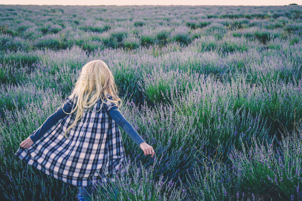 Young blonde woman alone in a lavender field - Stock Photo - Images