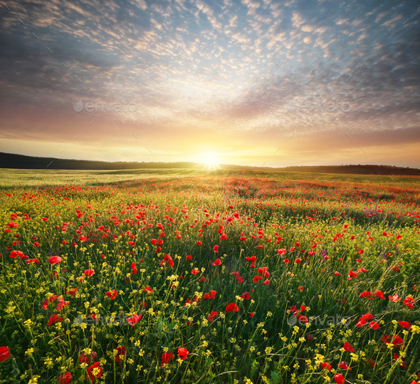 Spring flowers in meadow - Stock Photo - Images
