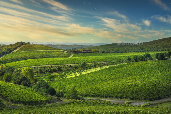 Gaiole in Chianti vineyards and panorama at sunset ...
