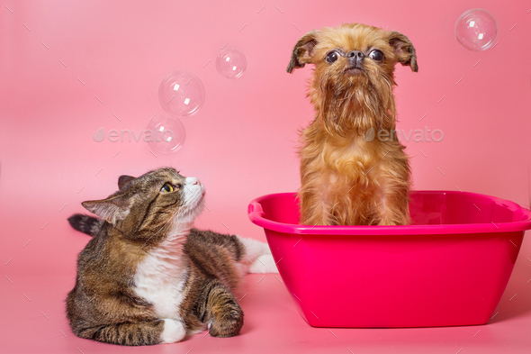 Dog and cat wash in a pink basin - Stock Photo - Images