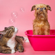 Dog and cat wash in a pink basin - PhotoDune Item for Sale