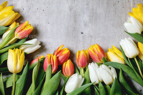 Variety of tulips flowers - Stock Photo - Images