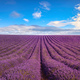 Lavender flower blooming fields endless rows. Valensole Provence, France. - PhotoDune Item for Sale