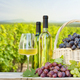 Colorful grapes in basket, white wine - PhotoDune Item for Sale