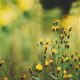 Close Up Grass And Yellow Flowers At Late Summer - PhotoDune Item for Sale