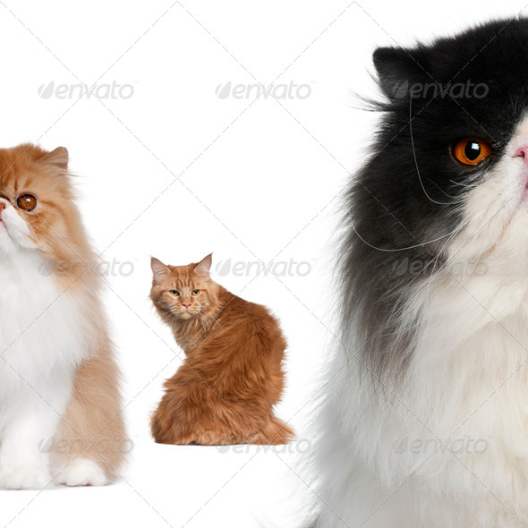 Portrait of group of cats in front of white background - Stock Photo - Images