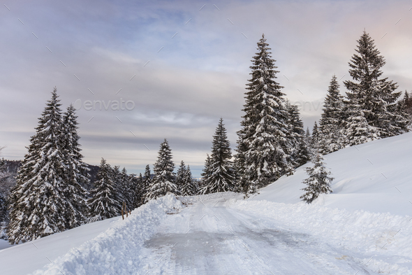 rustic road in winter - Stock Photo - Images