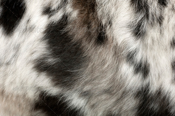 Close up of on the dog's fur in front of white background - Stock Photo - Images