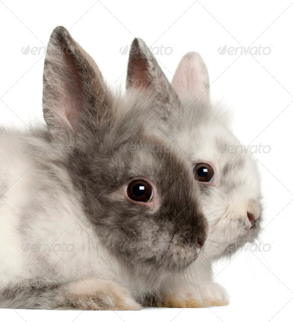 Portrait of rabbits in front of white background - Stock Photo - Images