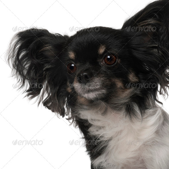 Crossbreed dog in front of white background - Stock Photo - Images