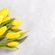 Yellow tulips on grey stone background - PhotoDune Item for Sale