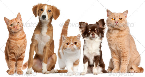 Group of cats and dogs in front of white background - Stock Photo - Images