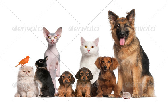 Group of pets: dog, cat, bird, rabbit - Stock Photo - Images