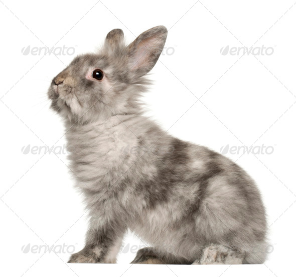 Rabbit sitting in front of white background - Stock Photo - Images