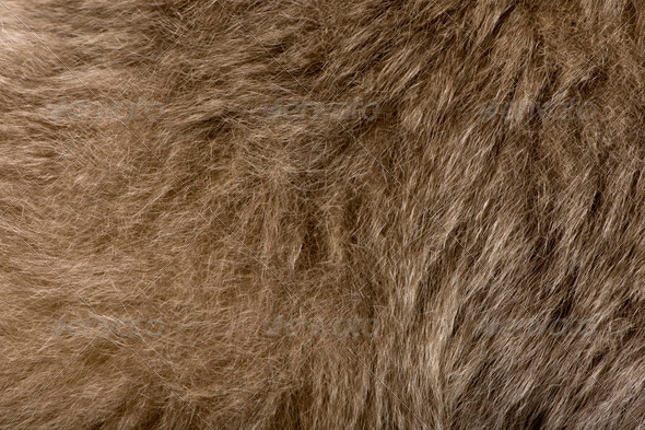 Close-up of Young Pileated Gibbon's fur, 1 year , Hylobates Pileatus - Stock Photo - Images
