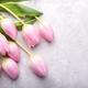 Pink tulips - PhotoDune Item for Sale