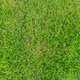 Beautiful green grass texture background - PhotoDune Item for Sale