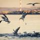 Gulls - PhotoDune Item for Sale