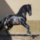 Beautiful black Andalusian horse. - PhotoDune Item for Sale