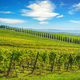Chianti vineyard panorama and cypresses row. Castelnuovo Berardenga, Siena, Tuscany, Italy - PhotoDune Item for Sale