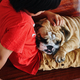 English bulldog sleep on the lap of a boy who is it own - PhotoDune Item for Sale