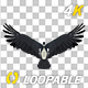 African Eagle - 4K Flying Loop - Back View - VideoHive Item for Sale
