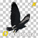African Eagle - 4K Flying Loop - Top Back Angle - VideoHive Item for Sale