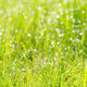 meadow grass with dew drops in sunshine, blurred background, after rain, closeup - PhotoDune Item for Sale