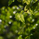 Close-up view of green leaves with droplets on a rainy day - PhotoDune Item for Sale