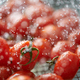 Close-up view of red ripe tomatoes while cleaning - PhotoDune Item for Sale