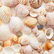 Seashells background seamless rexture, close-up view - PhotoDune Item for Sale