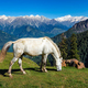 Horses in mountains. Himachal Pradesh, India - PhotoDune Item for Sale