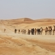 Herd of camels walking on sand road - PhotoDune Item for Sale