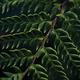 Closeup view of dark green fern leaves - PhotoDune Item for Sale