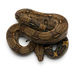 Red Tail Boa isolated on white background - PhotoDune Item for Sale