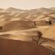 Trees in desert landscape - PhotoDune Item for Sale