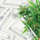 fresh marijuana flower on hundred dollar banknote - PhotoDune Item for Sale