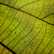 Background of a close-up view of leaf - PhotoDune Item for Sale