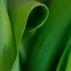 Green Abstract Foliage Background. - PhotoDune Item for Sale