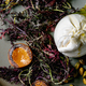 Salad with burrata cheese - PhotoDune Item for Sale