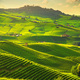 Langhe vineyards view, Barolo and La Morra, Piedmont, Italy Europe. - PhotoDune Item for Sale