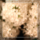 Flowers On The Wind Rotation - VideoHive Item for Sale