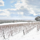 Bolgheri vineyards rows covered by snow in winter. Castagneto Carducci, Italy - PhotoDune Item for Sale